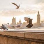 Londra la 82 euro/p în feb (cazare și zbor inclus), 4 zile