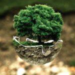 Corteva Agriscience selectează Dadelos Agrosolutions pentru Comercializarea Globală a Biostimulatorilor